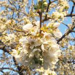 Blüten aufgenommen in Hahnheim von Filippa W.
