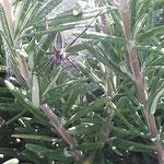 Spinne aufgenommen in Ingelheim von Anna M.