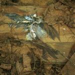 El ángel caído - Diego Ezequiel Pogonza