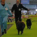 Grizzly und Yanosch beim Laufen.