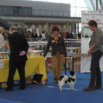 "Mittelspitz ""Queen"" im Stand V1 Jugd. CAC"
