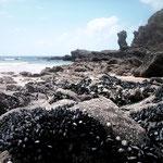 Richesse à découvert sur la côte sauvage de Belle-île