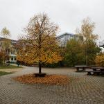 Pausenhof - Linde im Herbst