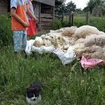 Maunzerle und viel Wolle für die Handarbeit