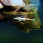 Frosch und Fisch