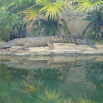 das berühmte Krokodil Pui Pui