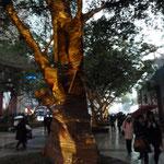 Die Bäume in Chongqing werden zum Neujahrsfest geschmückt