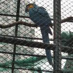 Im Hong-Kong-Zoo haben wir Affen, Schlangen, Schildkröten, Pflanzen und dutzende von Vögeln bestaunt. Leider alle hinter Gittern.