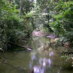 Meertje in het midden van de jungle