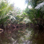 Mangrove woud