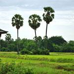 platteland in de omgeving van Kampot
