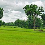 Platteland rondom Battambang