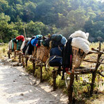 Sautara's - rustplaatsen voor dragers