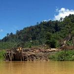 De immense houtkap