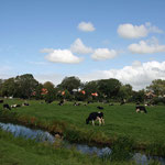 Typisch beeld in Friesland