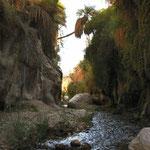 Wadi Ibn Hammad: niet ver van Kerak en iets groener dan Wadi Mujib