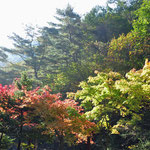 Herfstverkleuring in Sobaeksan National Parc