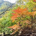 Herfstverkleuring in Sobaeksan National Parc