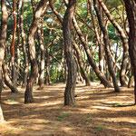 Grillige bomen in het Namsan Parc nabij Samneung