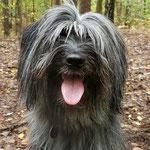 Mona Pyrenäen Schäferhund