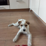 Maggie Parson Russell Terrier