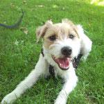 Eddie Parson Russell Terrier