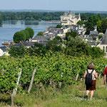 Randonnées vignes - Gite des Nerleux, 8-12 p