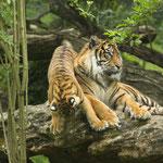 Bioparc Zoo de Doué-la-Fontaine - Gite des Nerleux, 8-12 p