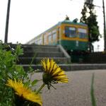 月潟駅の春(2)
