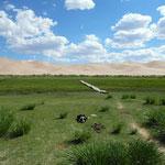 L'oasis au pied des dunes