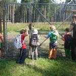 Besuch im Faberpark bei den Wildschweinen und Rotwild