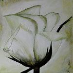 White rose 100 x 100