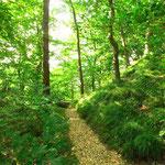 Waldansicht Helenenweg