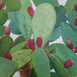 opuntia ficus indaca 3 . 100x70 cm acrilico su tela