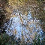 Spiegelungen - Frühjahr 2015
