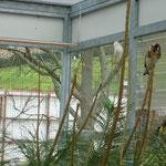 Außenflugvoliere mit Fenster zum Schutzhaus