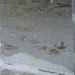 Satinet im Schneebad