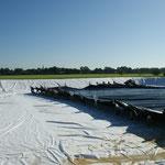 Hier wird die Plane (7000m²) ins neue Regenwasserauffangbecken gezogen
