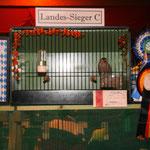 Gimpel - Landessieger 2010 Züchter: A. Wunderle