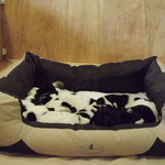 Amaria auf Wach- bzw. Schlafposten