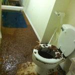 dégats des eaux remonté colonne wc immeuble