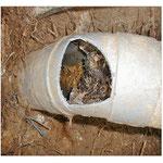 Racine canalisation bouchée plombier urgent