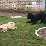 Spiel mit Freund