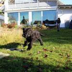 Alpha im Garten