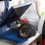 Swiffie bei der Arbeit auf der Presse