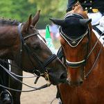 Becks und Antonias Pferd Champagner sind echte Freunde geworden
