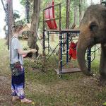 elephant_me