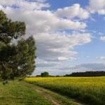 Spazieren in wunderschöne Natur - Niederer Fläming