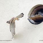 Nachschub holen - Foto: W. Ewert