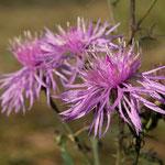 Blütenträume - Foto: W. Ewert